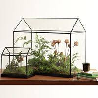 Glass Greenhouse on Wantist