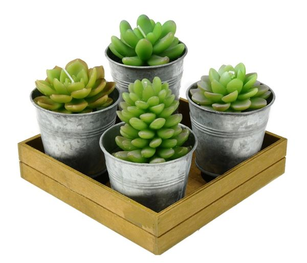 Potted Succulent Candles by Roost on Wantist