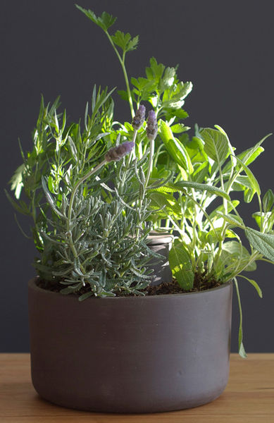 Self-Watering Planter by Joey Roth on Wantist